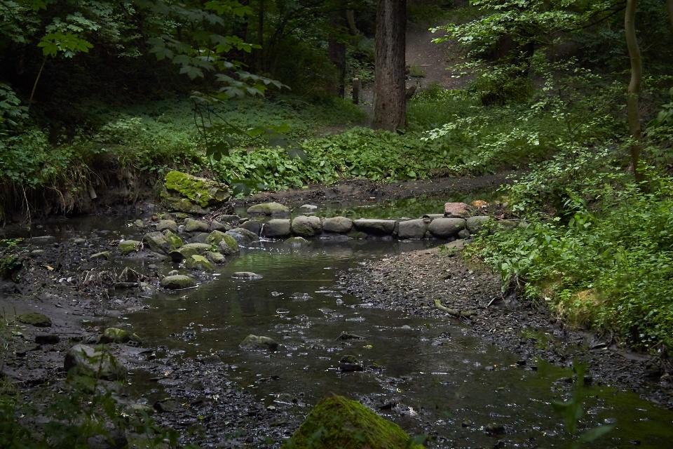 А это уже другой парк - более дикий, больше напоминающий лес