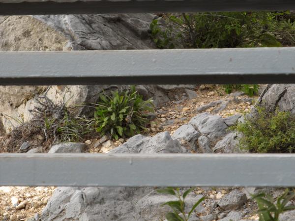 Камни и растения в округе выкрашены (не нарочно конечно) в цвет лестницы
