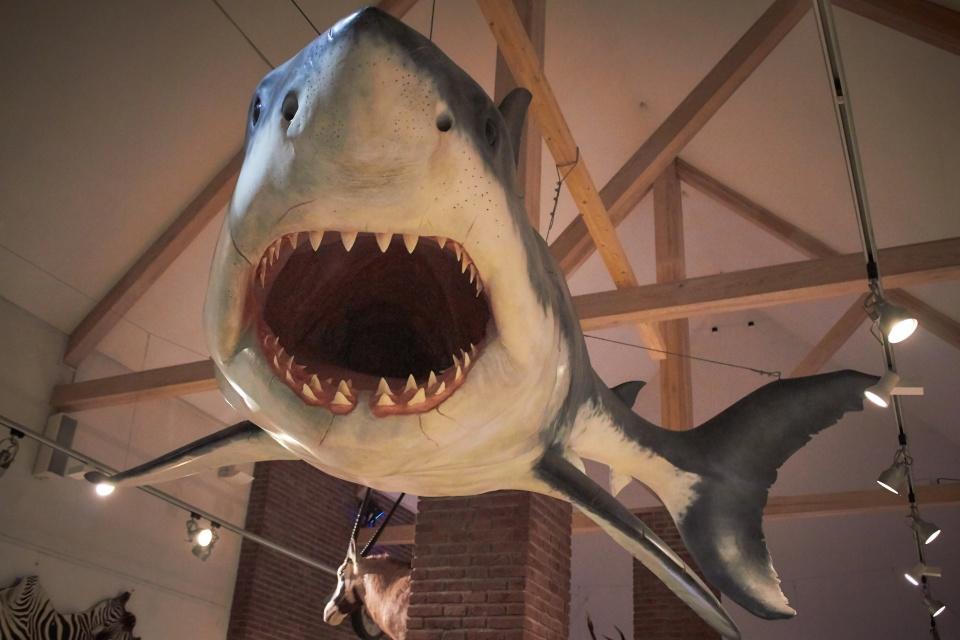 А эта акула - уже часть экспозиция в здании