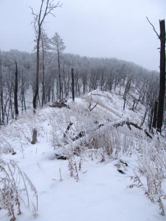 Деревья превратились в обгорелые обрубки