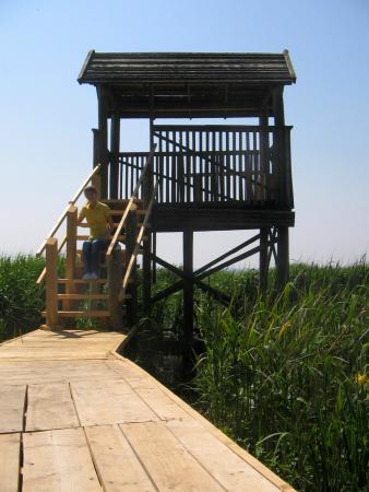 Обзорная площадка на берегу Куршского залива