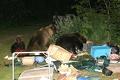 Как вести себя при встрече с медведем?