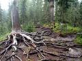 Я-экотурист: Ергаки - прогулка в туман