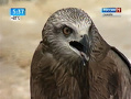 Самая быстрая птица планеты поселилась в Самарском зоопарке
