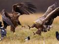 Конкурс на лучшую фотографию птиц «Птицы России»
