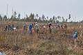 Тольяттинцы восстанавливают сгоревший лес