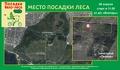 Восстановление Тольяттинского леса и не только